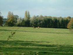 Byford Farm Services horses grazing